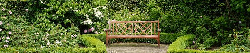 acheter des plantes de haies. Black Bedroom Furniture Sets. Home Design Ideas